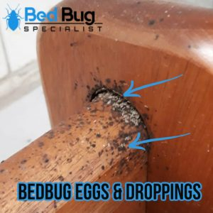 Bedbug signs and symptoms